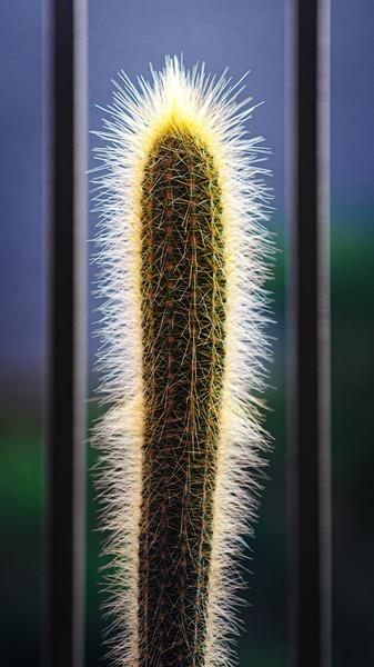 cactus 110619-0390.jpg