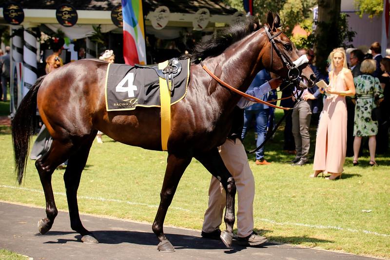 Sun Met_Race 1_ KR Maiden Plate-0523.jpg