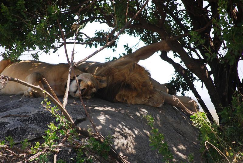 Serengeti (187).JPG