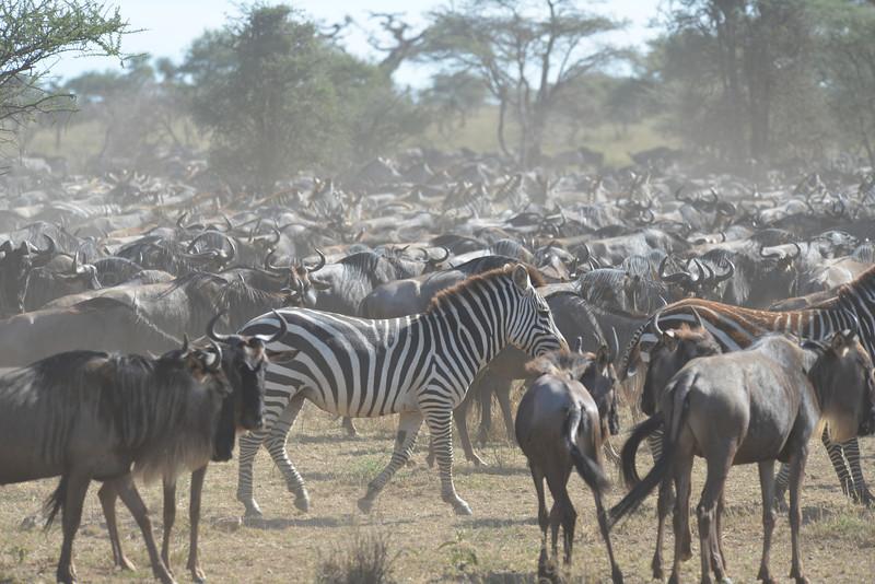 East Africa Safari 316.jpg