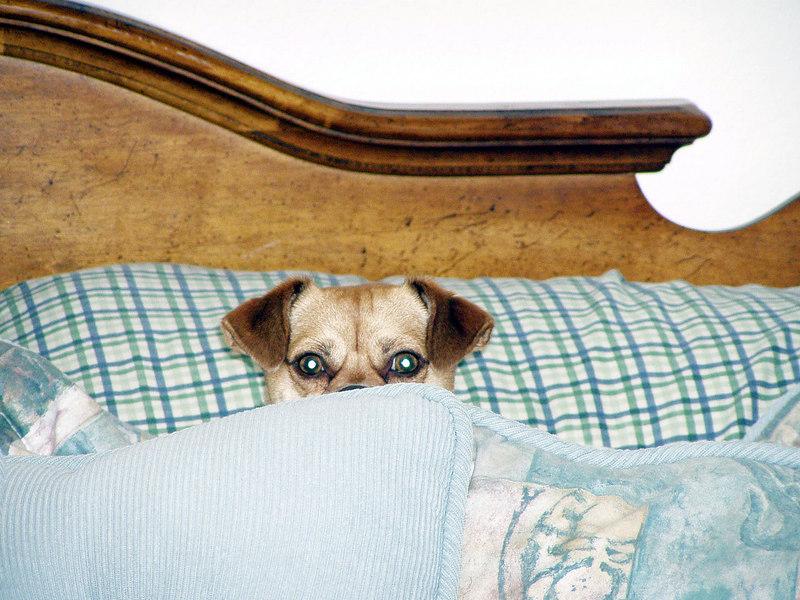 23. Precious - Sharon and Curtis dog.JPG