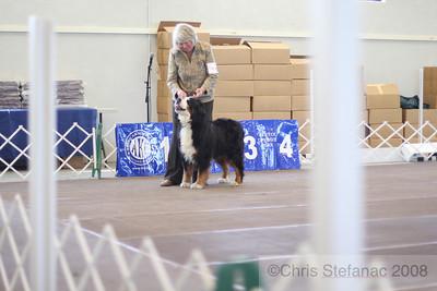 Sweeps Veteran Dog 11+ yrs-PV 09