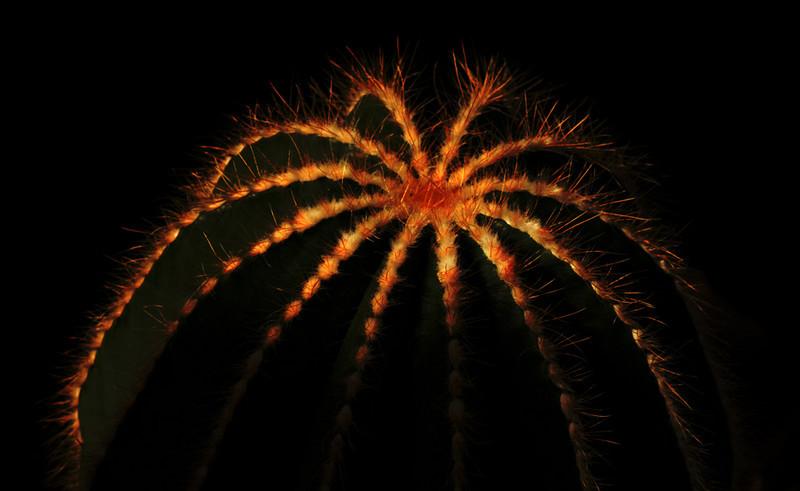 volunteer_park_01066_erupting_cactus-sm.jpg