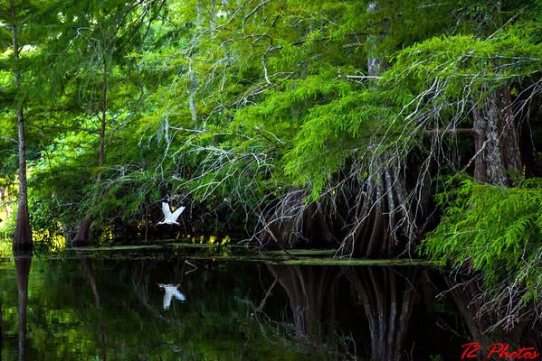 Chicot State Park, La