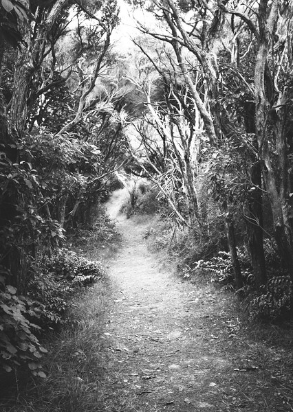 Path in the woods...