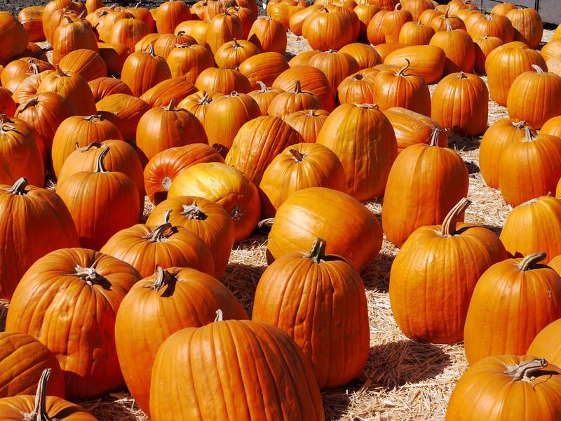 arcane-auto-nov-2010-pumpkin-run-040.JPG