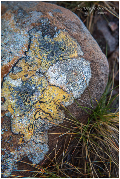 Stone with yellow and orange lichens, Coire Mhic Fhearchair