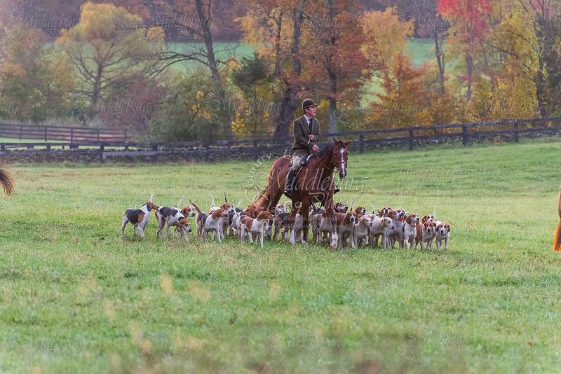 Piedmont Hounds-2013-Fiddlers Green