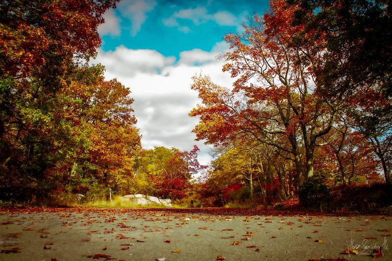 photographer-new-york-new-jersey-ecuador-fall-2020-jorge-sarmient-jr-IMG_7138.jpg
