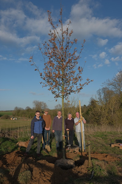 Oak Trees for Pauline