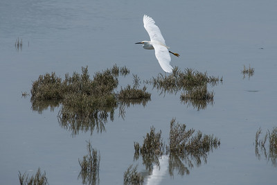 SF Bay Wetlands