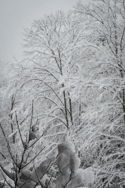 November 2018 Snowfall-_5009225.jpg
