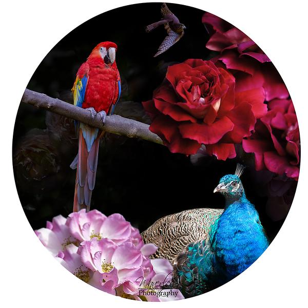 Bird composite.png