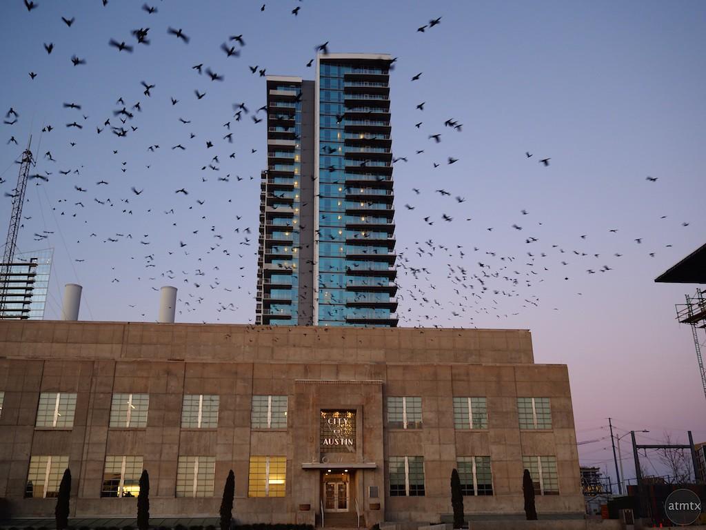 The Birds, Seaholm Power Plant - Austin, Texas