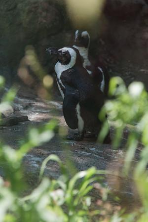 August 2020: Seneca Park Zoo