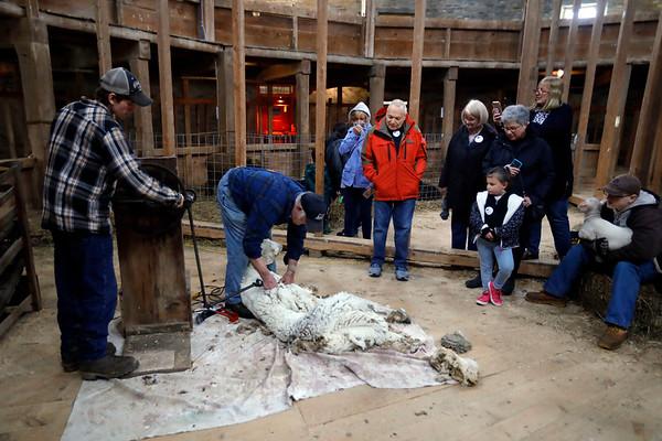 Hancock Shaker Village Shearing Weekend-042719