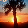 sunrise palm