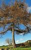 .............a tree :-)