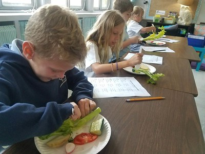 3rd Grade Fruit vs. Vegetable Science Experiement