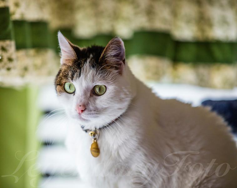 Cats_Lamborghini_0.jpg