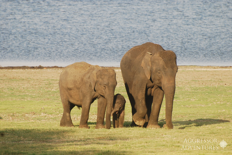 srilanka-animals-wm4.jpg