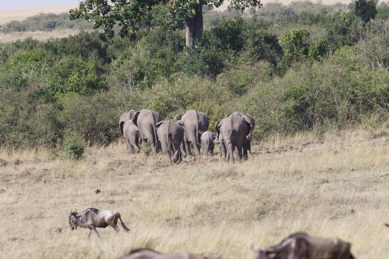 Kenya 2015-03655.jpg