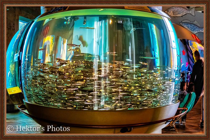 acquarium-17.jpg