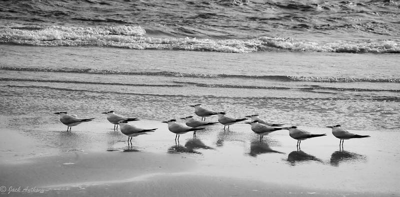 seagulls_2211-2.jpg
