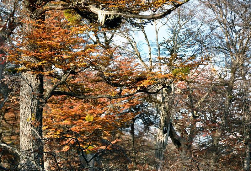 2012 Karukinka fall tree light .jpg