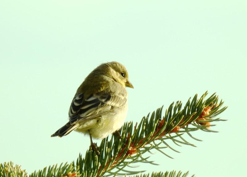 birds (136).JPG