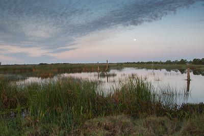 Viera Wetlands II 1-6-15