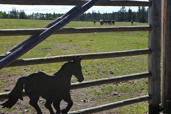 Free Rein Guest Ranch