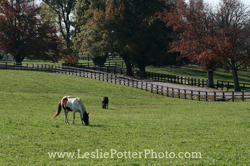 Horse Grazing in Autumn