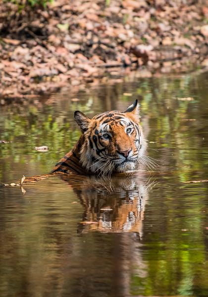 India_April_2019-1541.jpg