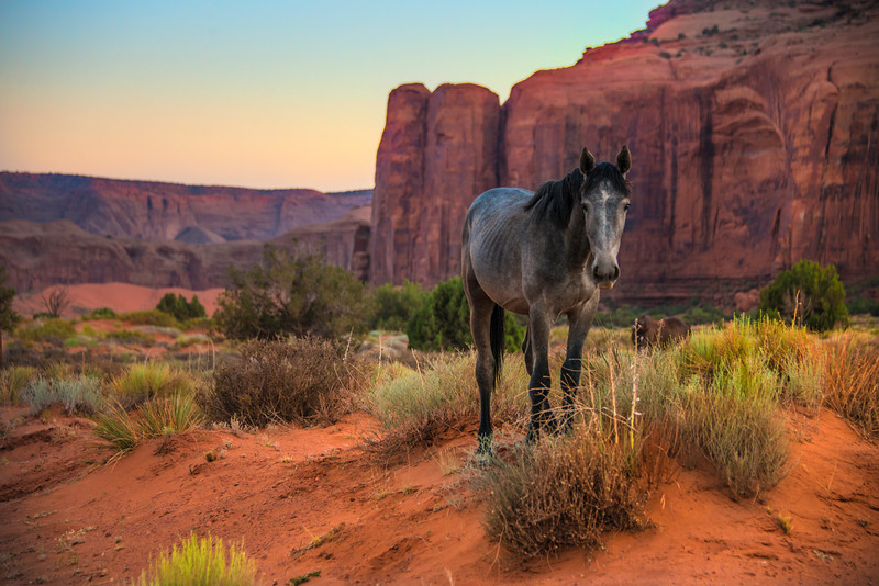 Monument Valley Horse.jpg