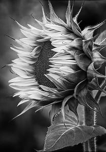 Black & White and Monochrome