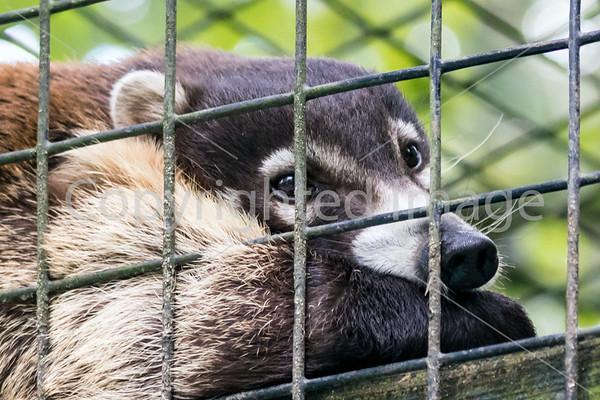 Cohanzik Zoo