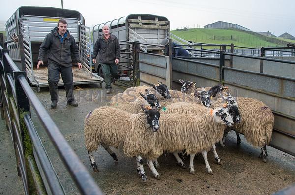 Hawes prime lambs January 2018