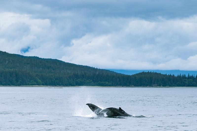 Alaska 2015 - Juneau -  072615-406.jpg