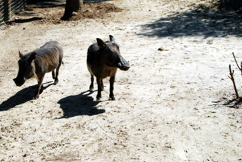2014 Zoo in Sanford, Florida (23).JPG