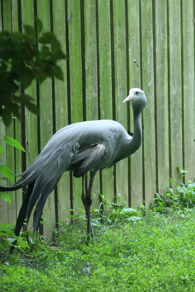 Birds080407_0010.JPG