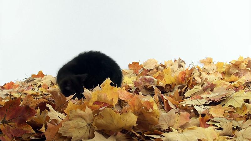 black_kitten_01.mov