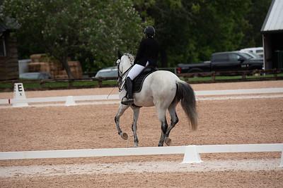 Horse 366