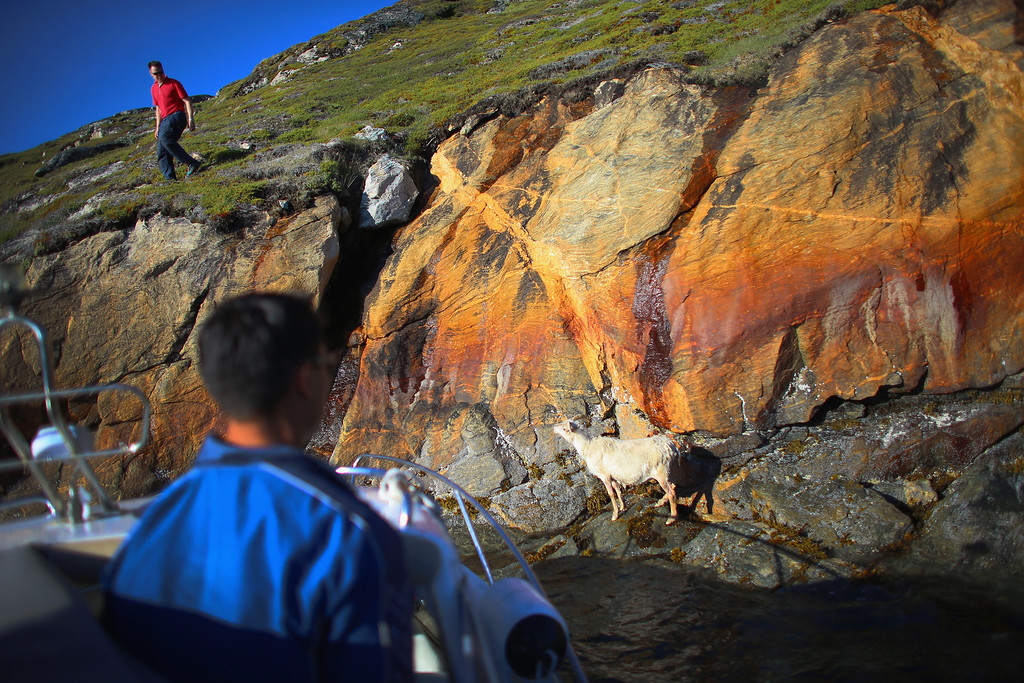 . Pilu Nielsen (L) and his brother Kunuk Nielsen try to capture one of their goats that became stuck at the bottom of a cliff near the water on the families farm on July 30, 2013 in Qaqortoq, Greenland.  (Photo by Joe Raedle/Getty Images)