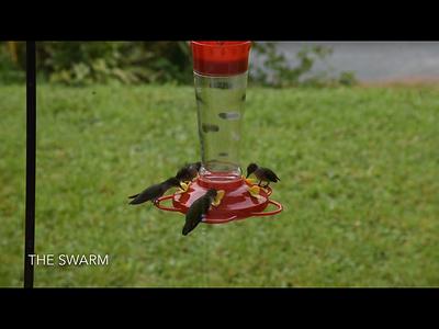 The Swarm 8-11-2019