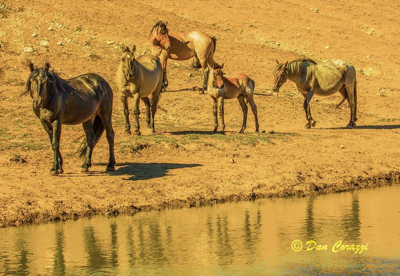 5 Mustangs-1aa.jpg