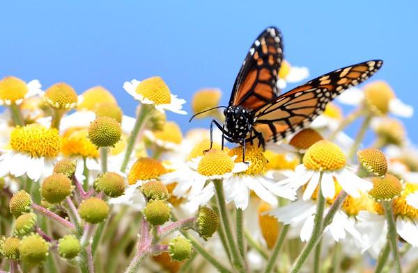 Butterfly Farms 2021