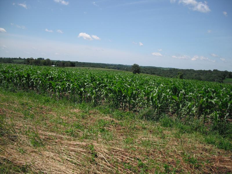 2009-07-11 Rolling farmland outside Cashton WI (2).JPG