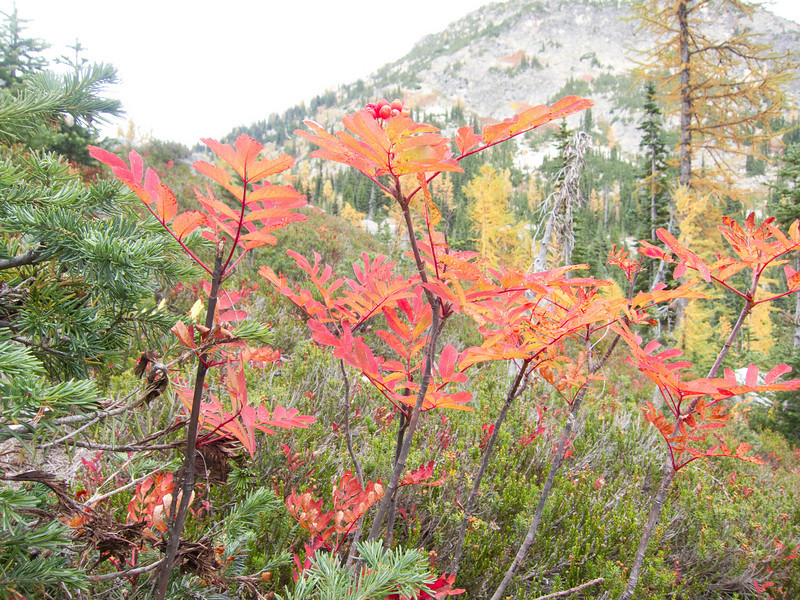 Fall colors in the North Cascades