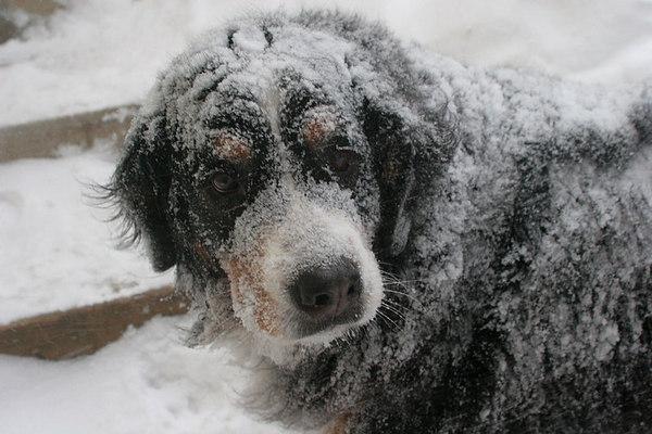 Blizzard Dec 20, 2006